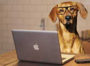 Dog Reading Picture