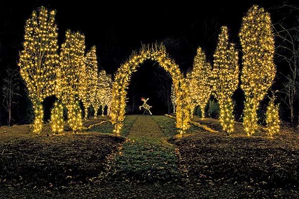 Christmas Lights - Rudolph