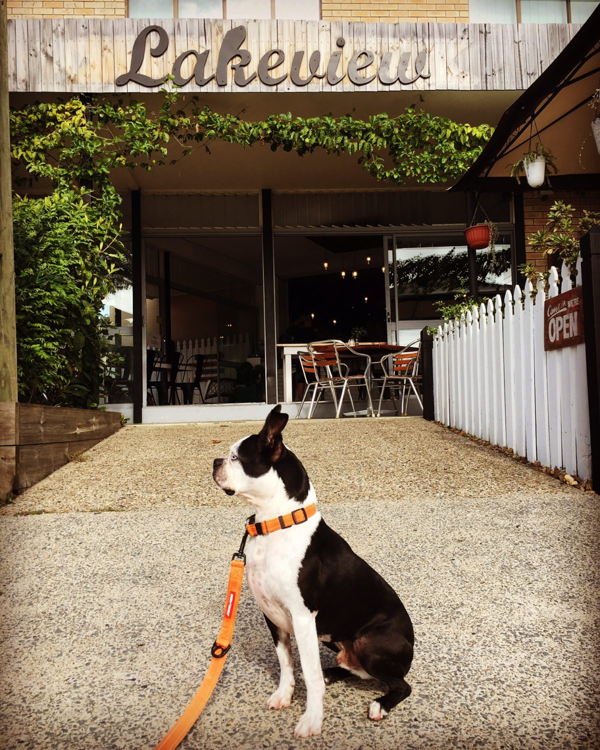 Brain's Pet Friendly Cafe Discovery Mission – Lakeview Cafe Burleigh Waters