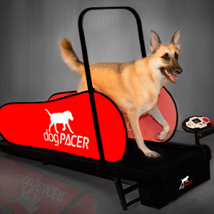 Dog Pacer