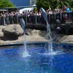 Vancouver Aquarium a Delight for Adults and Kids