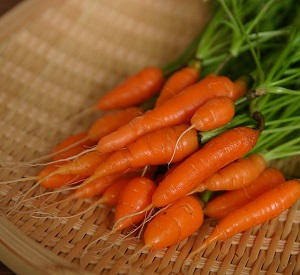 Best Container Vegetables for Winter Gardens