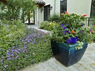 Celebrate the Holidays with a Festive Container Garden