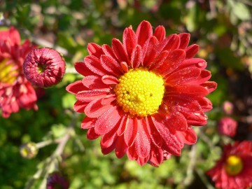 Top Plants & Flowers for Butterfly Gardening