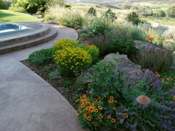 Gorgeous, Low Maintenance Plants Great for Xeriscapes