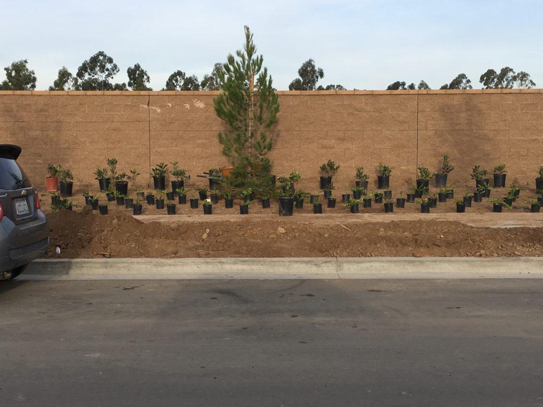 Indigo and Silverleaf – Portola Springs, Irvine