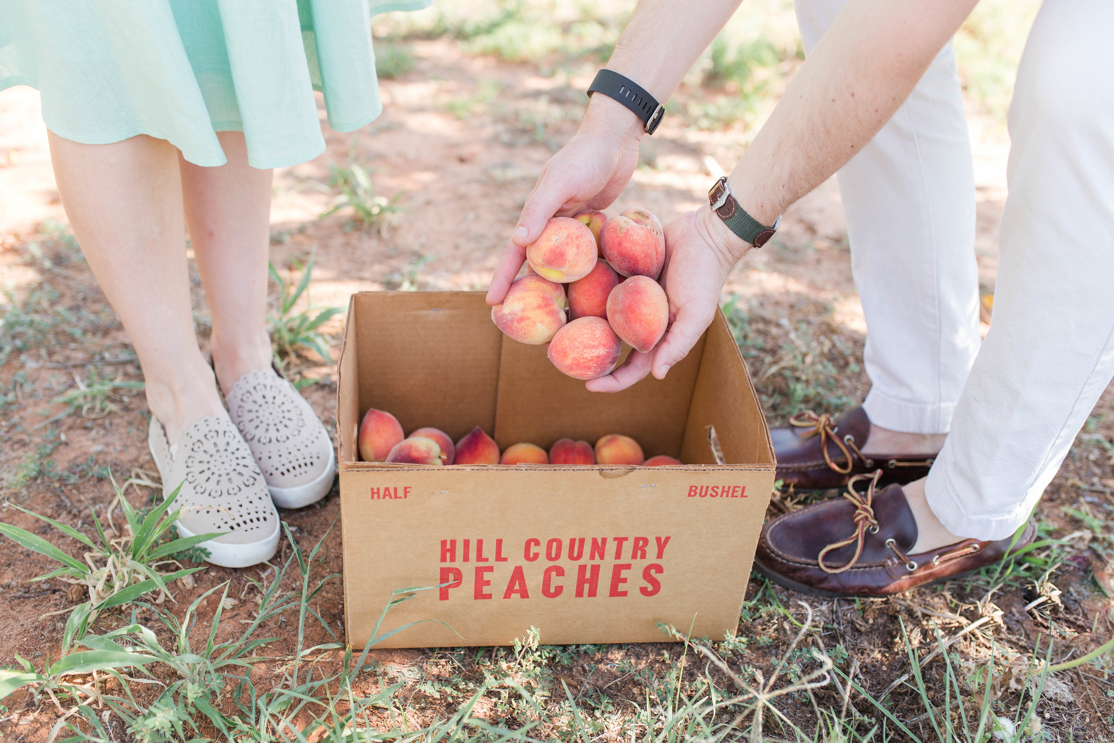 peach picking in Fredericksburg