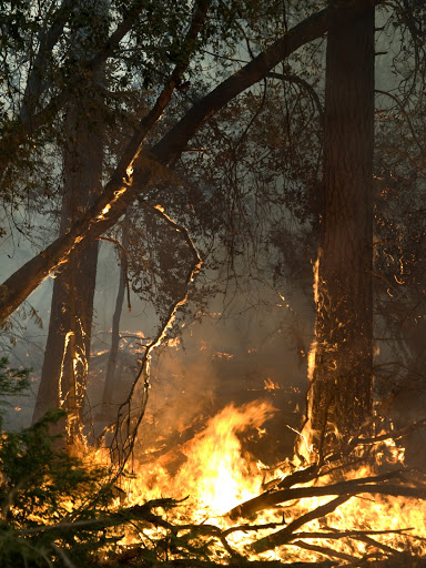 Getting Burned . . . The Cost of Wildfire . . . $200 Million