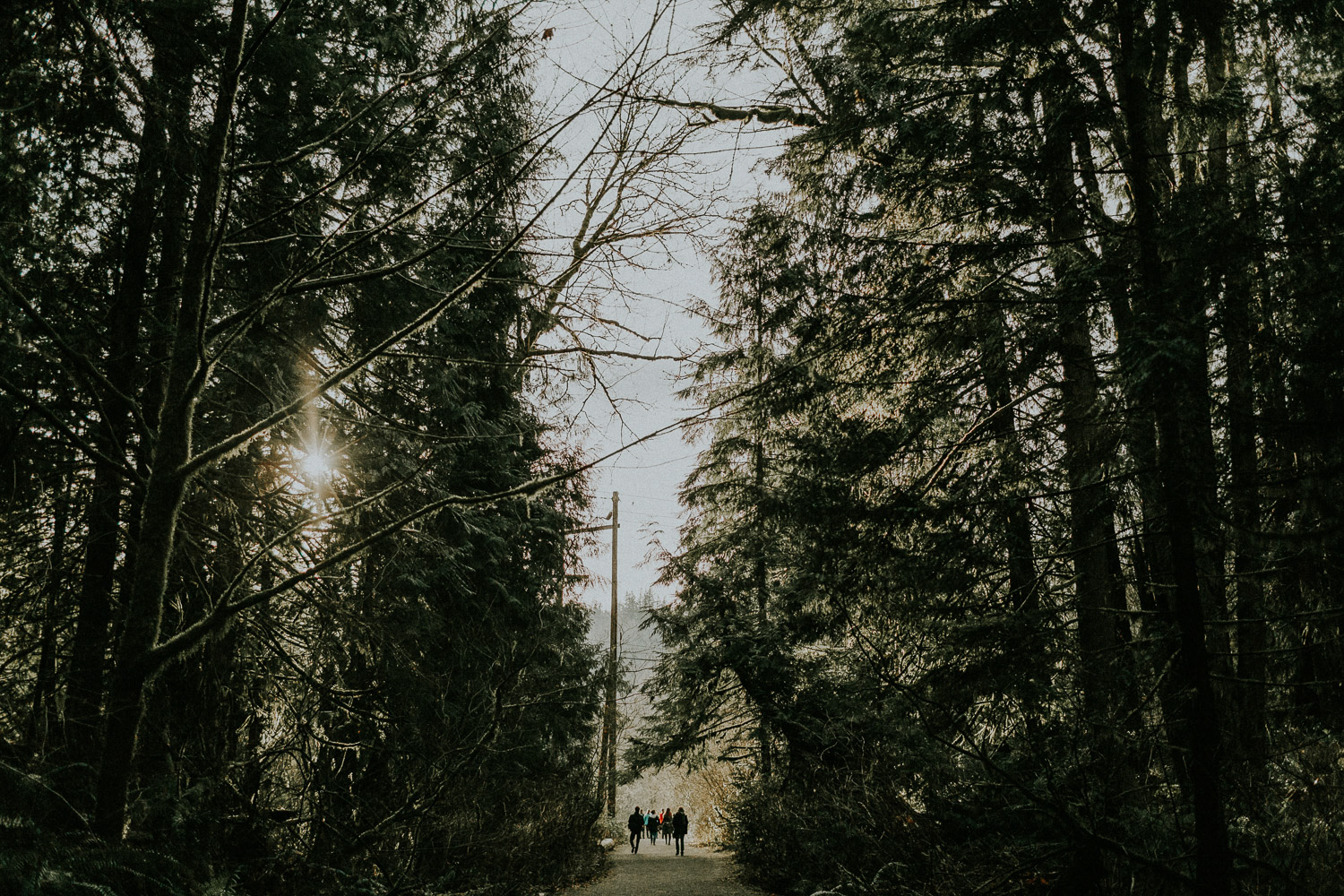 Image of people waking inside pine trees
