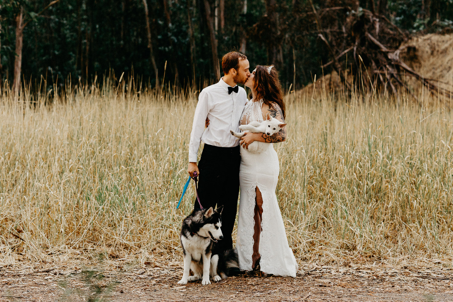 Image of groom kisses bride while groom takes the leash of black husky and bride holds the white husky in the arm