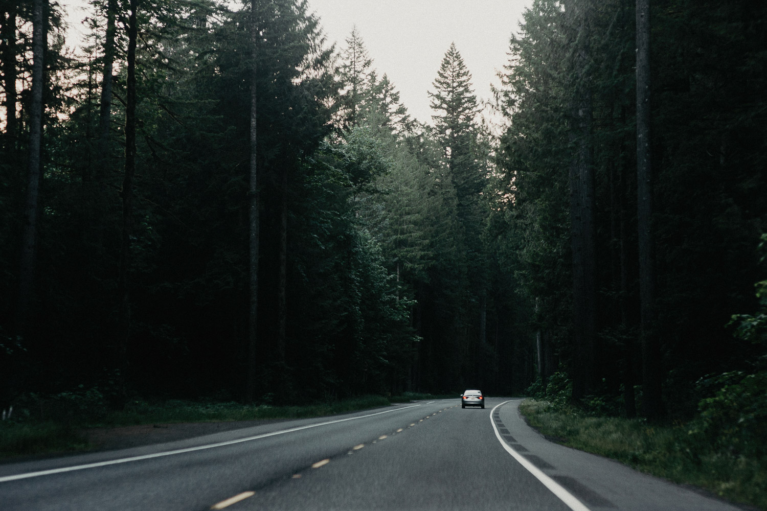Image of car on the road surrounded by green pine trees in Portland