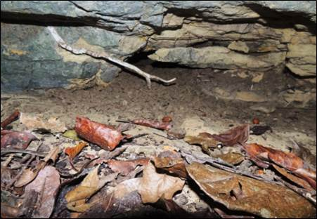 Solenodonte amplia lista de especie