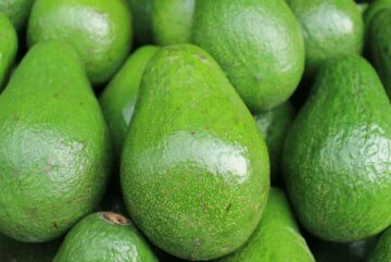 cropped Aguacate