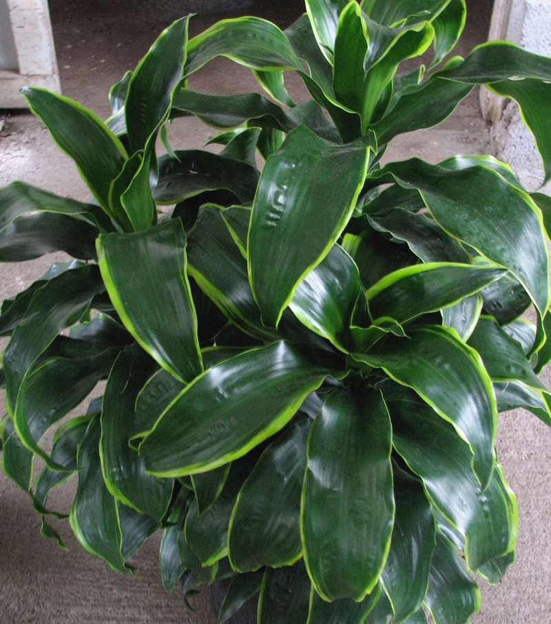 What is the difference between an INDOOR plant and an OUTDOOR plant?