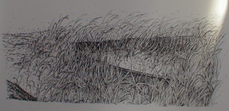 A sketch of an old deteriorated boat in the weeds at waters edge