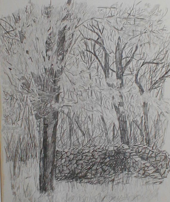 A pencil sketch of an old stone wall in the woods