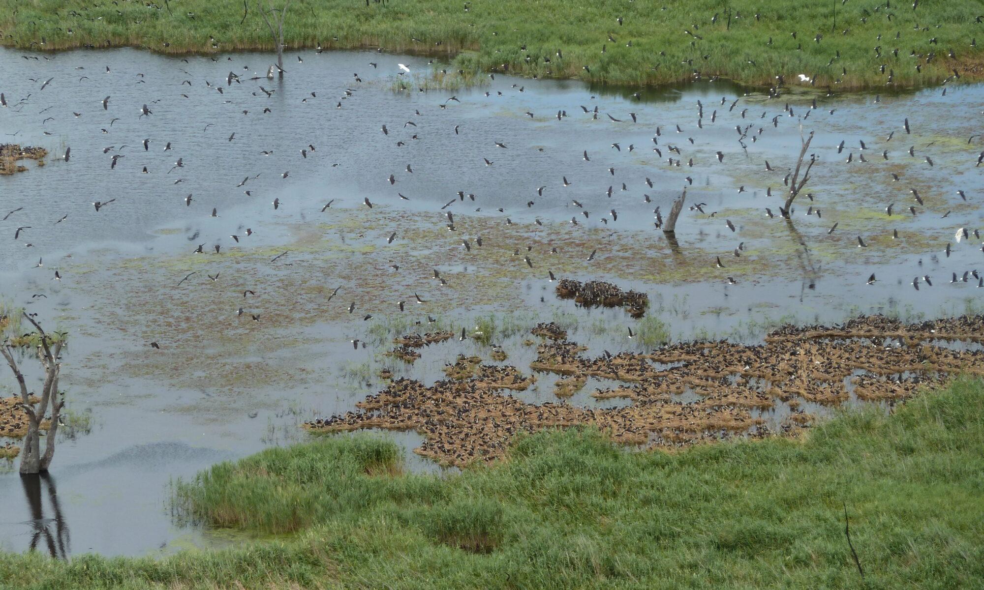 WetlandSnap