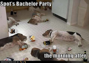 6b156-funny-dog-pictures-bachelor-party