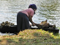 Cleaning the cow head in the river, Vang Vieng, Laos