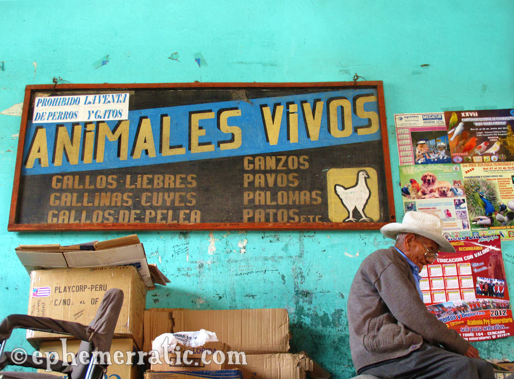 Animales Vivos, Mercado San Camilo, Arequipa, Peru photo