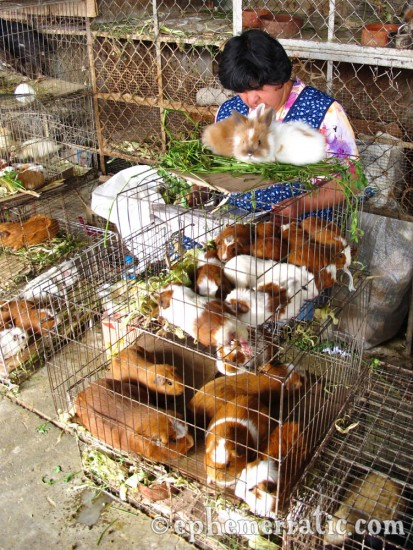 Guinea pigs for sale, Mercado San Camilo, Arequipa, Peru photo