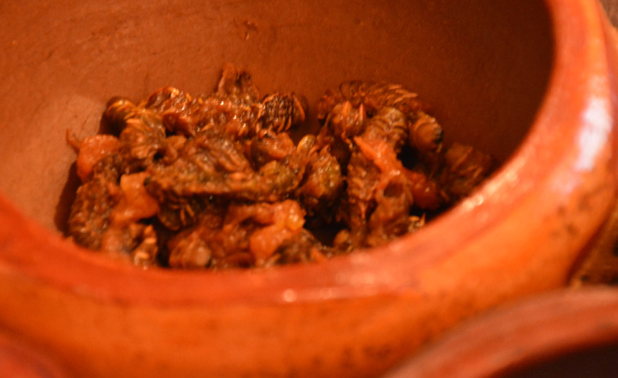 caterpillars-bowl-close-385
