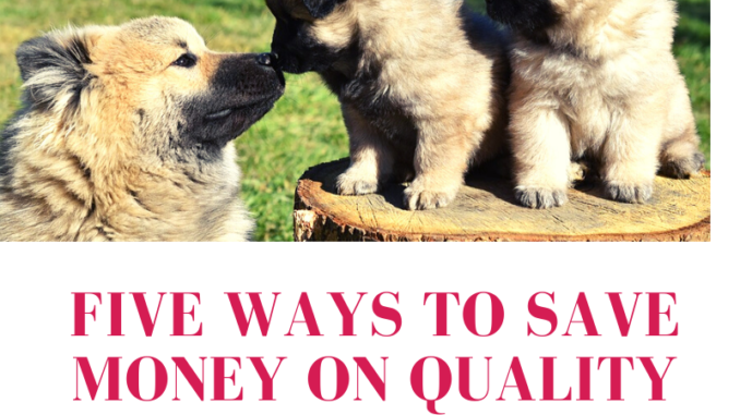 Five-Ways-to-Save-Money-On-Quality-Veterinary-Care