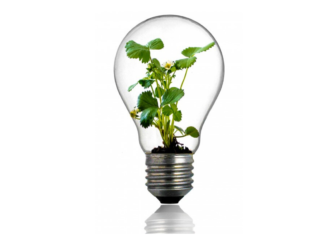 Light bulb with a green plant in it