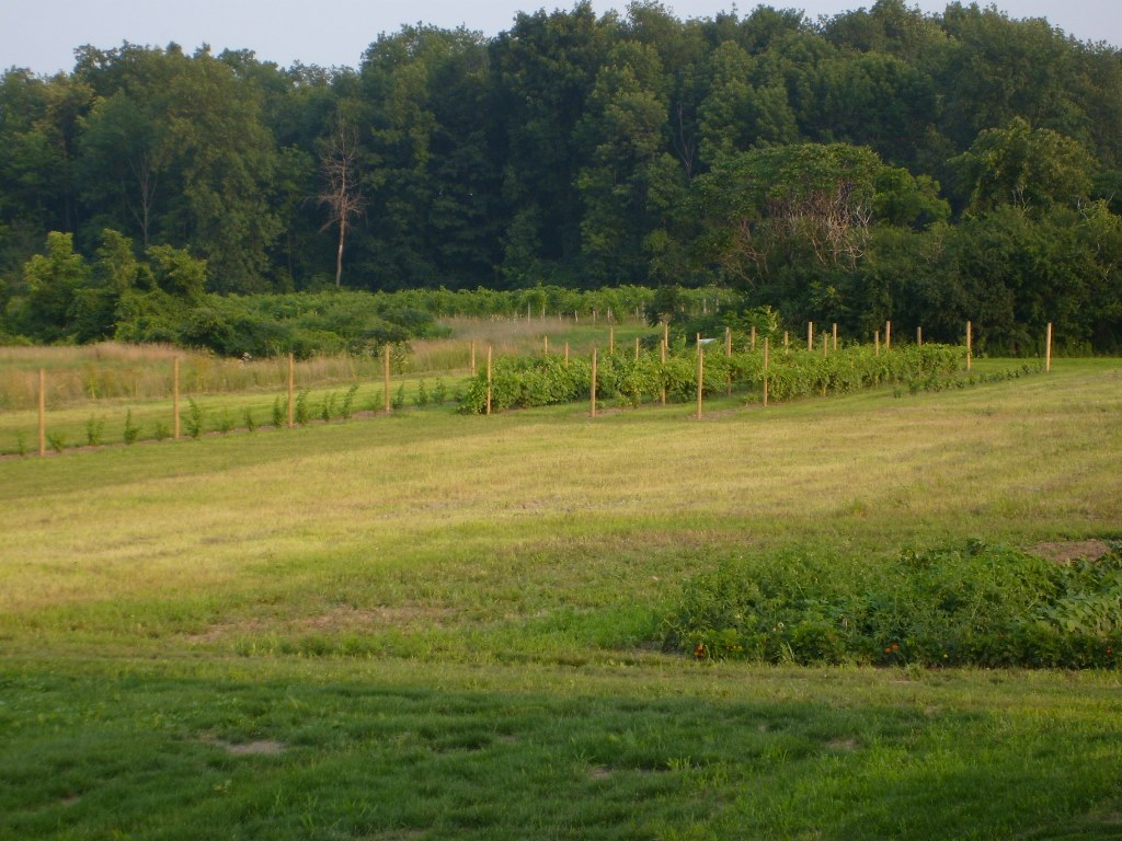 The Vineyard in 2008