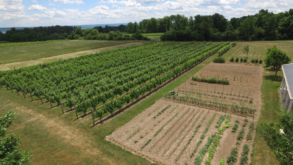 An overview of New Vines' vineyard and garden