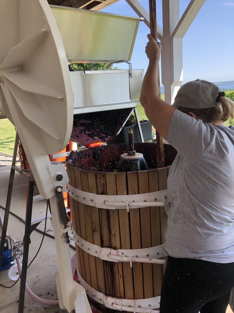 A woman using a stick to load grapes into a press