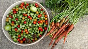 garden tomatoes and carrots