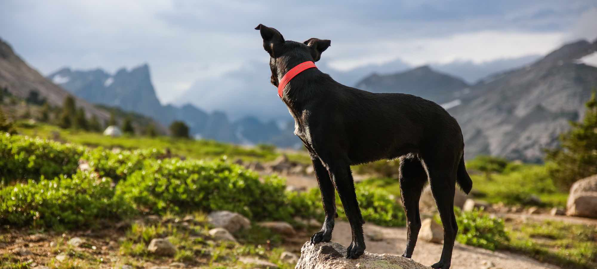 Black dog with red collar outside in mountains