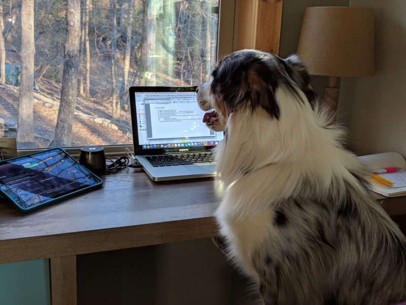 Take your dog to work with you