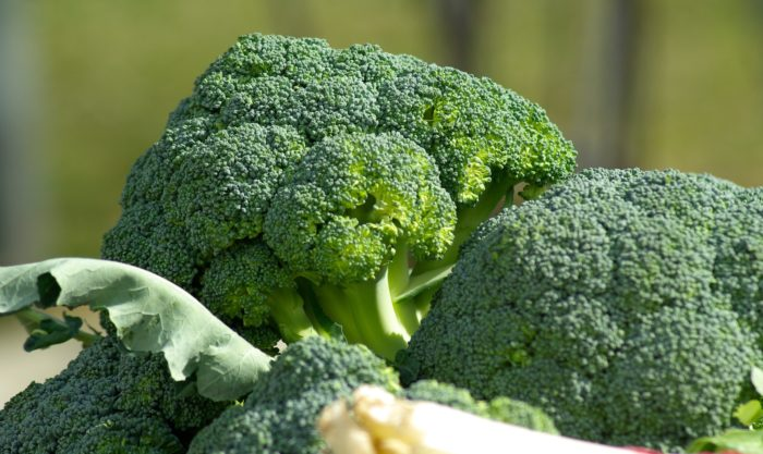 Dogs can eat broccoli with caution