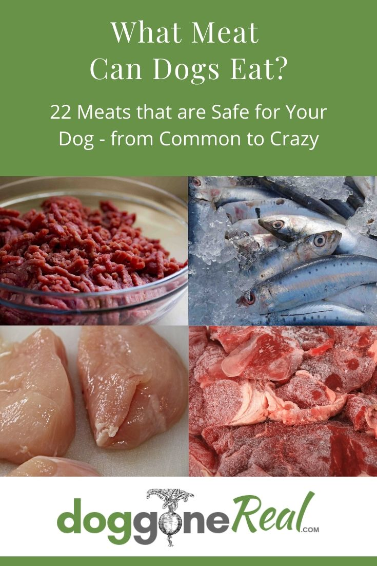 What Meat Can Dogs Eat?