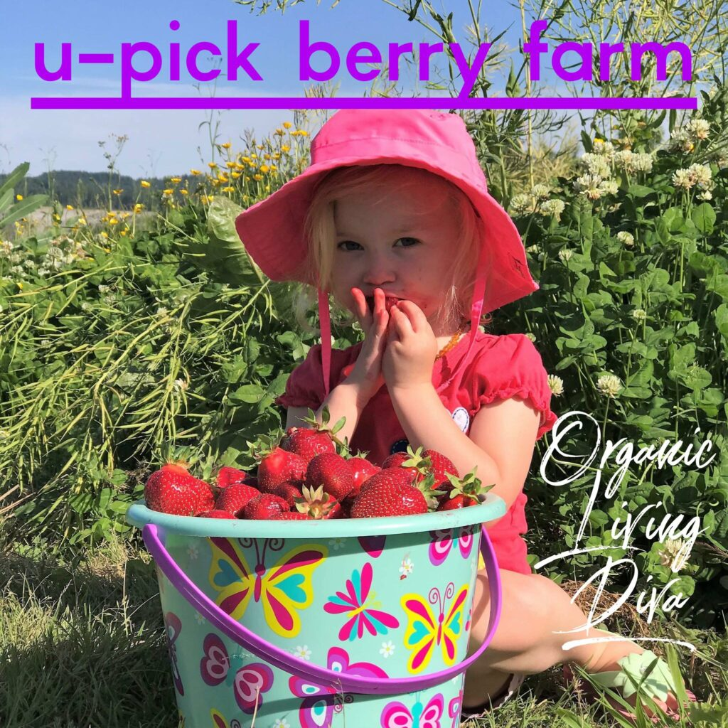 U-pick berry farm and toddler eating strawberries