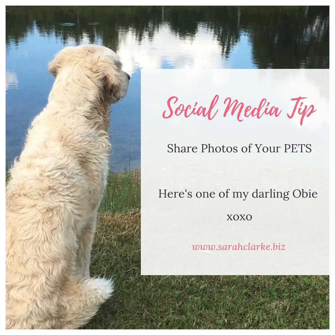 social media tip share photos of your pet