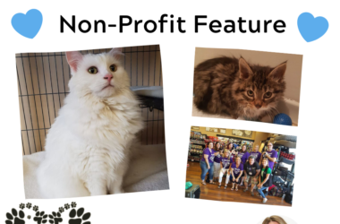 Non profit feature All Paws Rescue Cat Rescue Toronto
