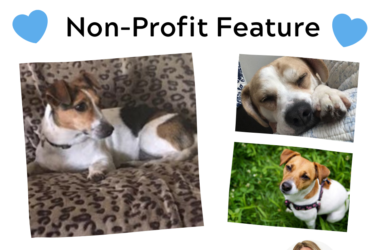 Non Profit Feature