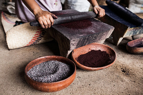 Grinding cochineal insects in the studio of Porfirio Gutiérrez y Familia