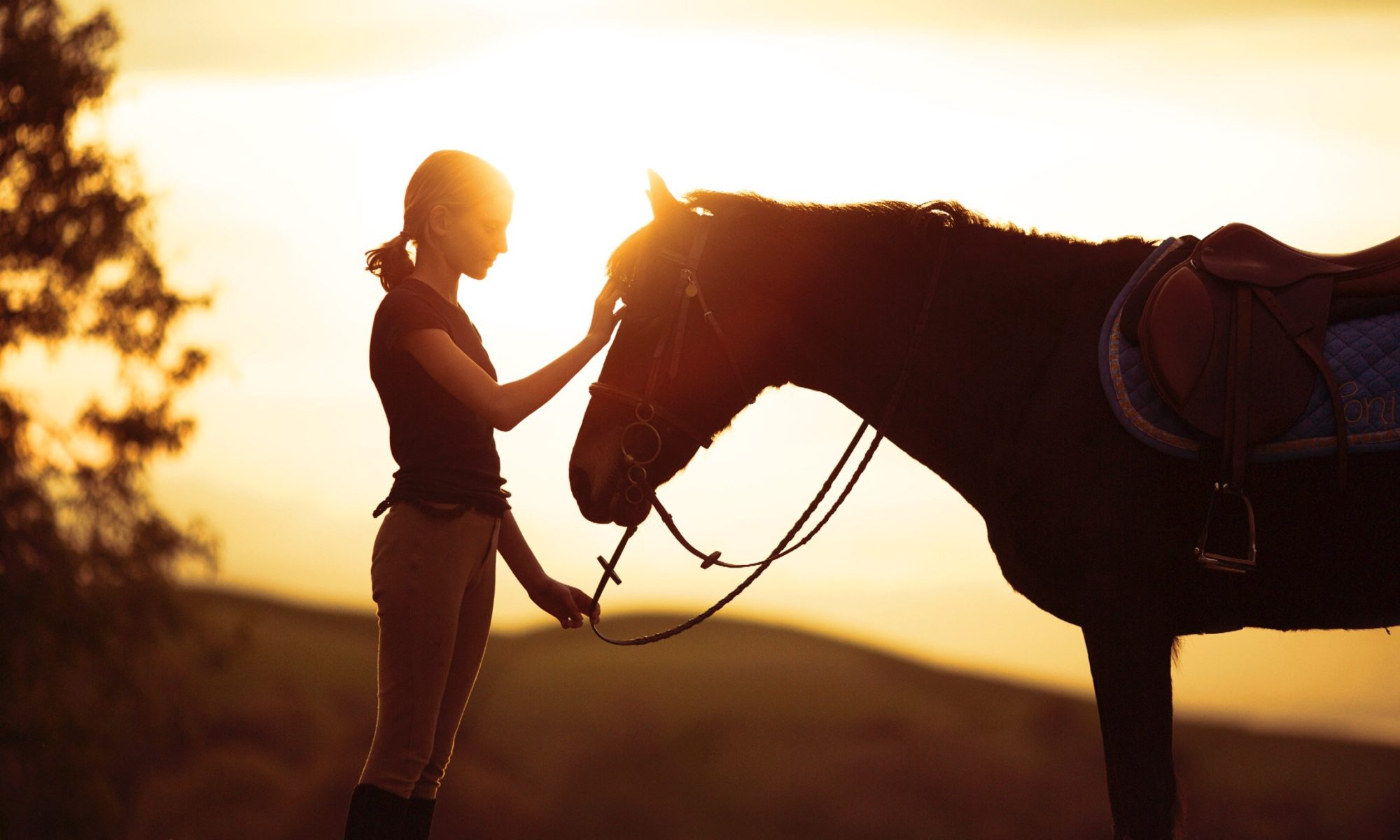 HC Equestrian