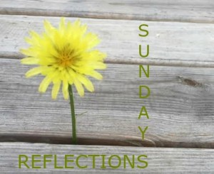 Sunday Reflections