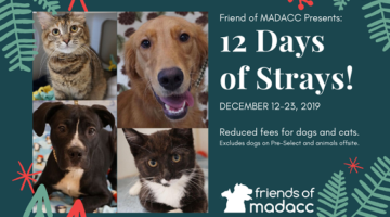 12 Days of Strays