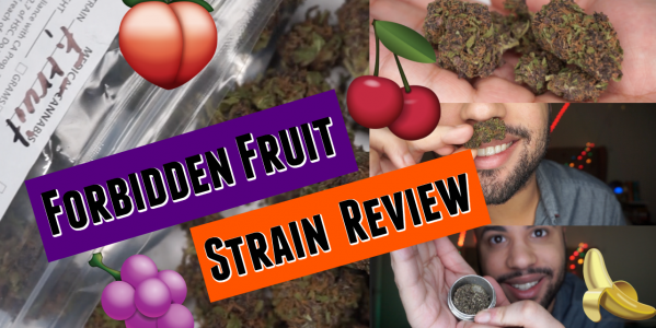 Forbidden Fruit Strain Review