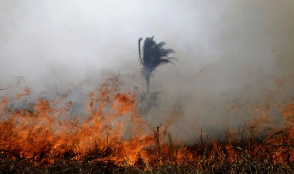 Amazon rainforest fires are an environmental crisis: Here's how you can help