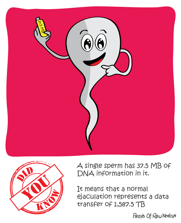Did You Know - Data in Sperms