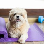 exercise with your dog - dog on yoga mat
