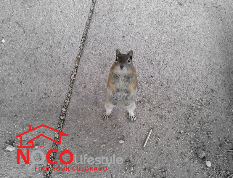 critter_nocolifestyle