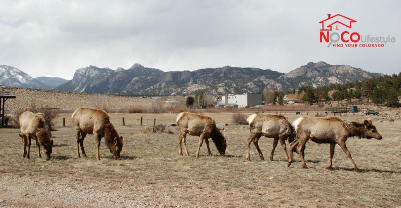elk_field_nocolifestyle